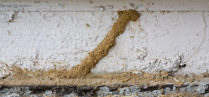 Orange Oil Termite Treatment